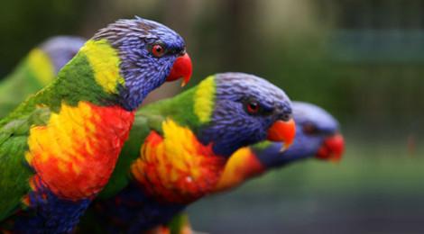 Burung Hobi Terpopuler di Indonesia Versi Google