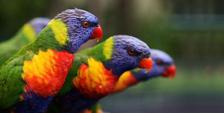 Burung popular 1