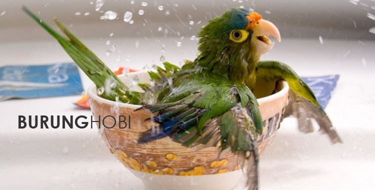 Memandikan Burung 1