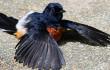 Apasih Manfaat Menjemur Burung Dipagi Hari?