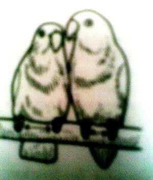 Cara Membedakan Lovebird Jantan dan Betina (Foto: Repro dari Buku Lovebird)